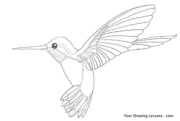 Cute Baby Hummingbird Coloring Pages