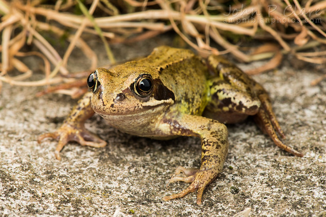 Travel Toad Travel Insurance Reviews