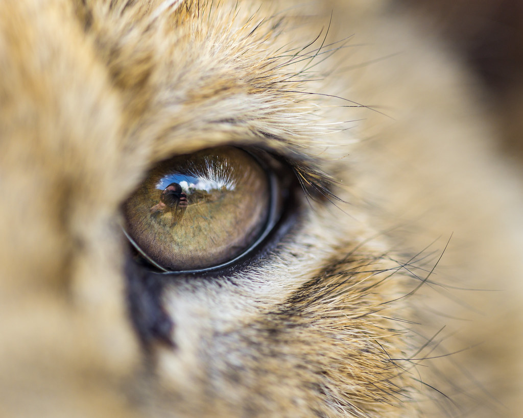 Image Result For A Lion Is