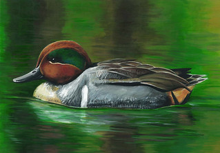 2014 Georgia Junior Duck Stamp winner | by USFWS/Southeast