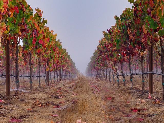 Vineyards of Sonoma County, CA