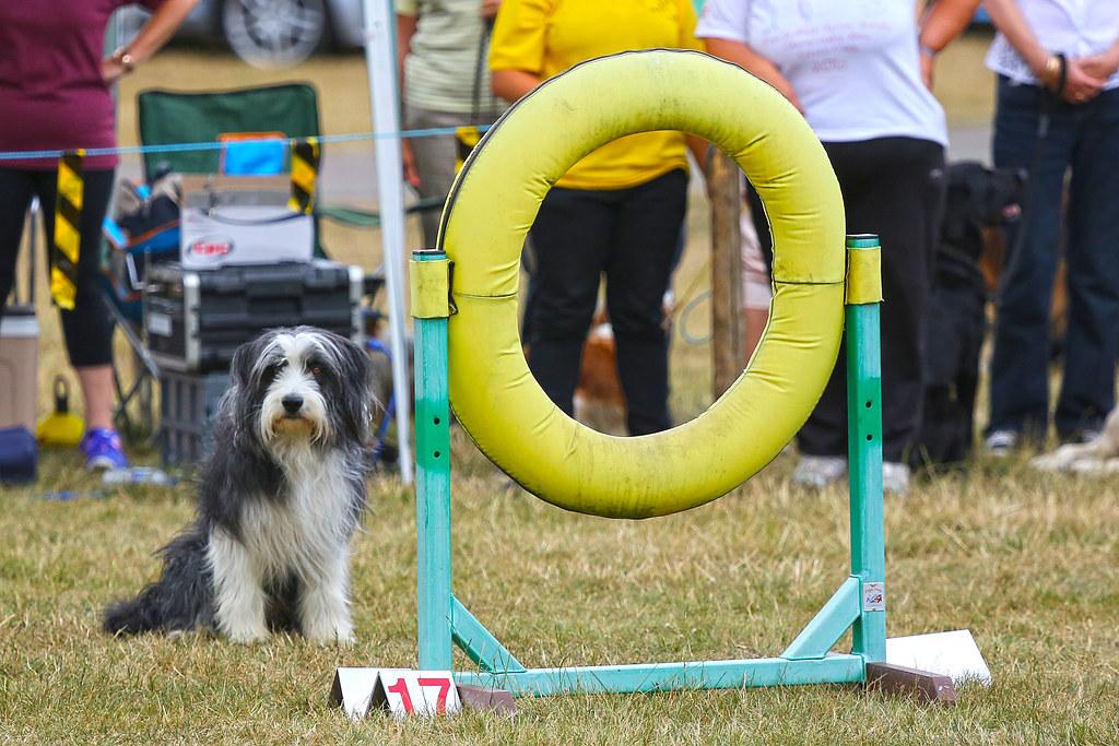 Dog Agility Park Perth