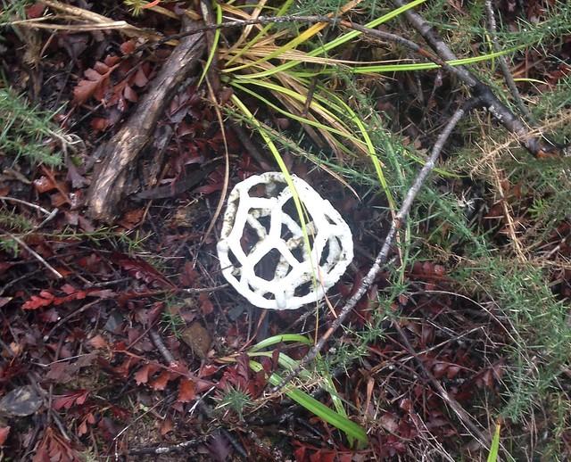 White Basket Fungus at Okura Bush