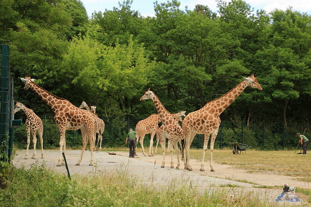Tierpark Berlin 24.06.2014  145