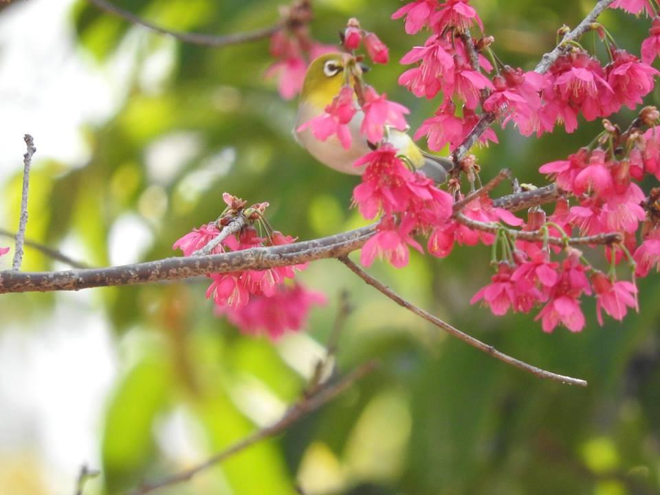 朵朵甜。圖片來源:陳秀竹。
