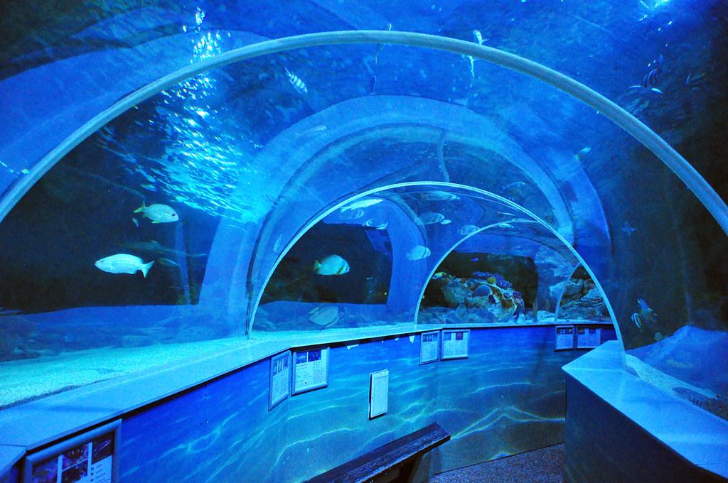 Sea Life Aquarium Southend