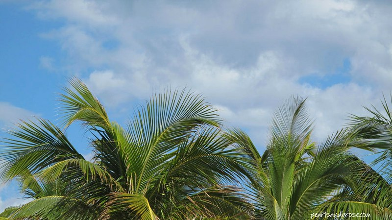 ftlaud_palms_web