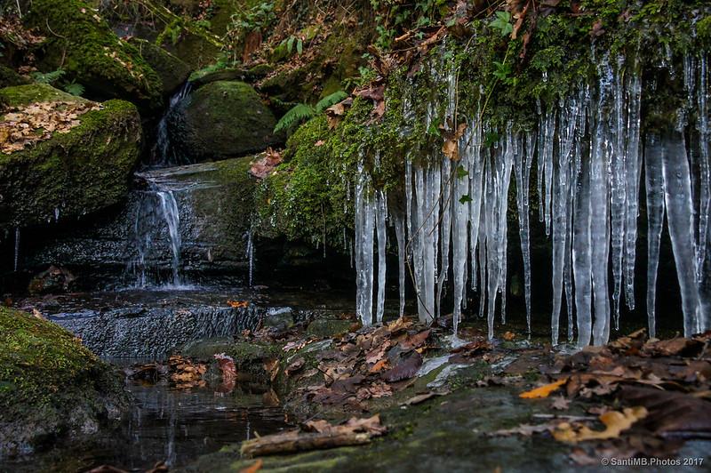 Carámbanos de hielo en un torrente