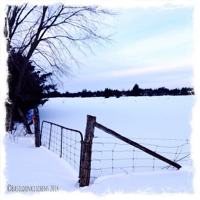 13/2/2014 - perfect {a perfect rural winter scene} #fmsphotoaday #winter #snow #rural #field #gate #princeedwardcounty