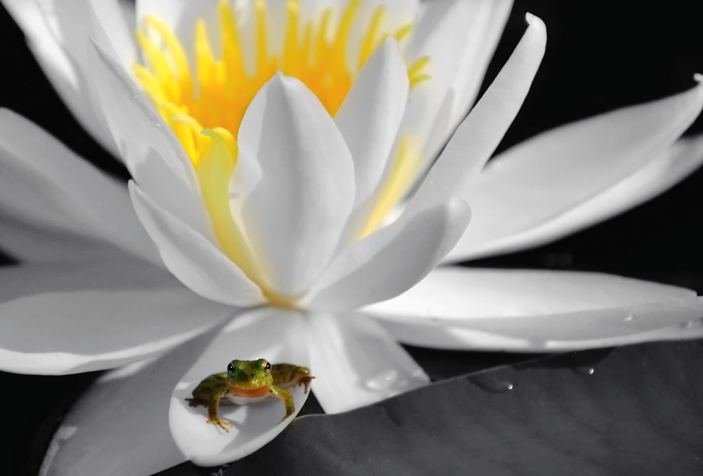Image Result For Frog On Lily