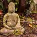 Backyard Buddha