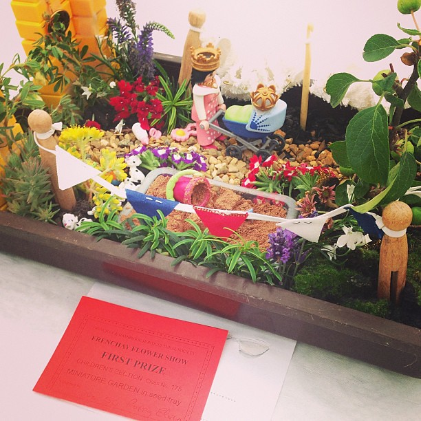 First prize miniature garden in seed tray childrens 39 se for Tray garden designs