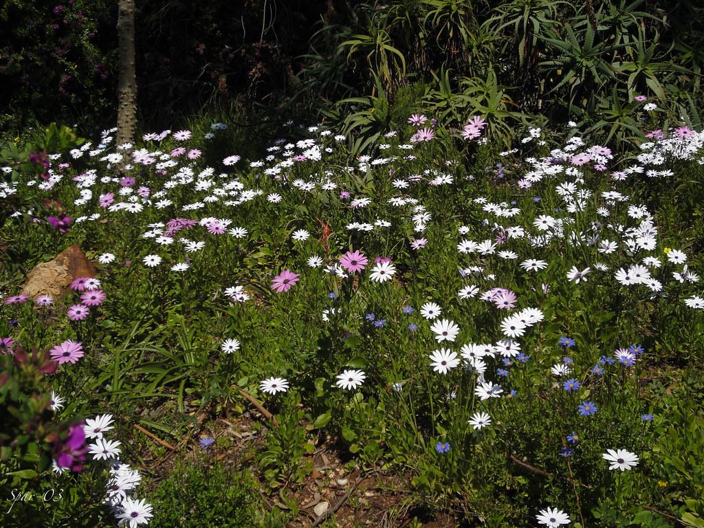 Parterre de fleurs superbe parterre de fleurs dans le for Parterre 3d