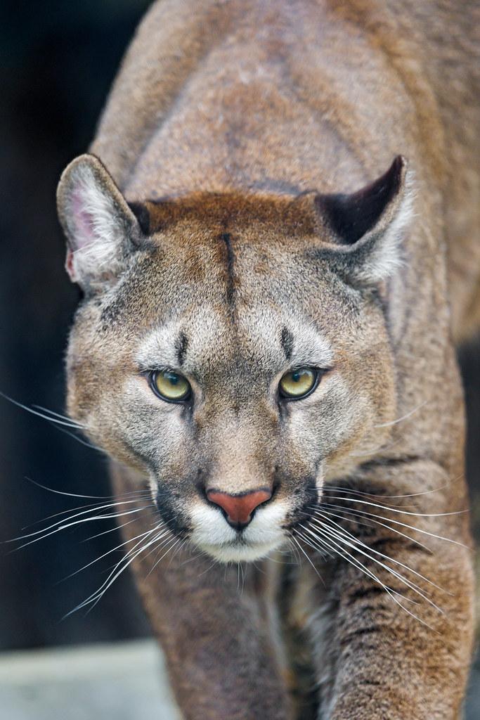 Cat Like Eyes