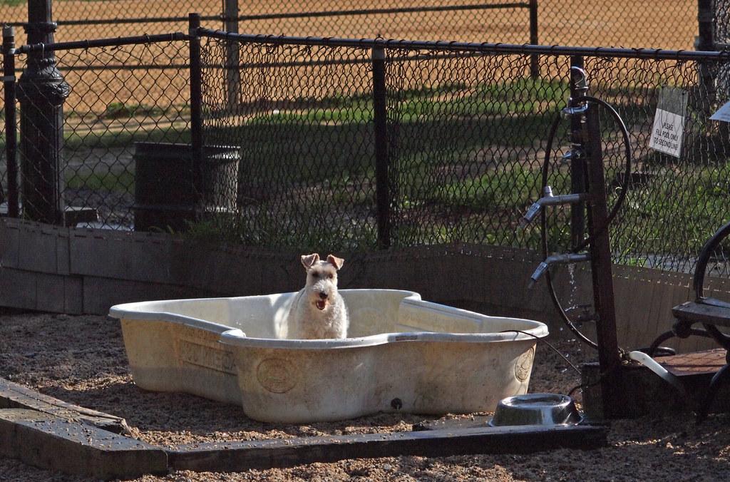 Dog Bone Pool Australia