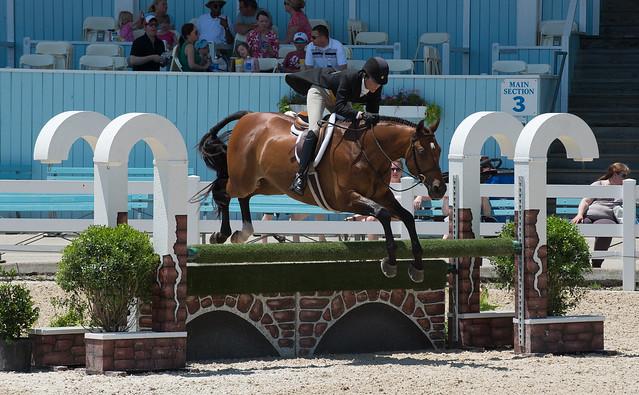 90% des chevaux peuvent être nourris au foin, même ceux qui travaillent à un niveau amateur.