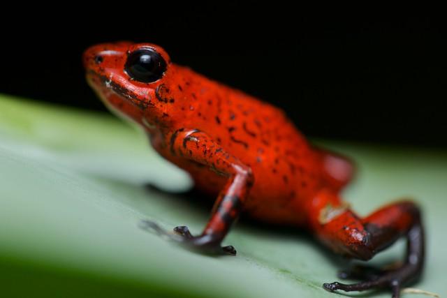 Frog (22) - Frog