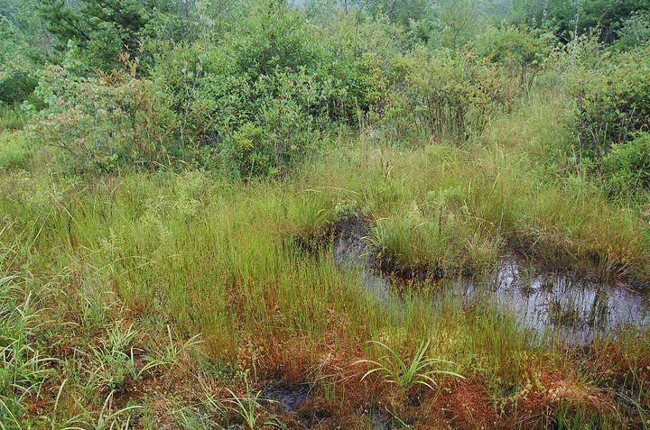 mountain bog