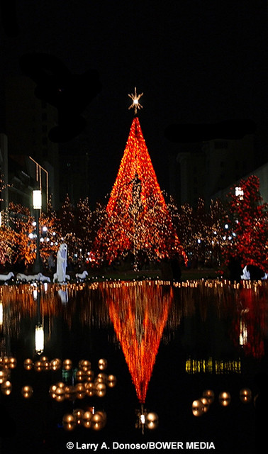 Christmas tree water reflection flickr photo sharing