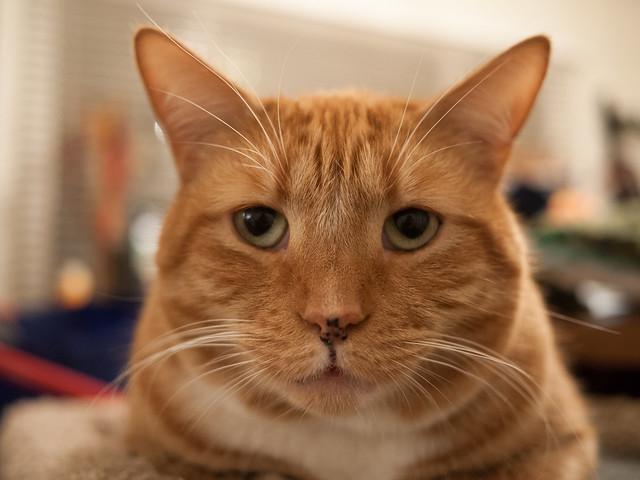 Alley Cat Food Website