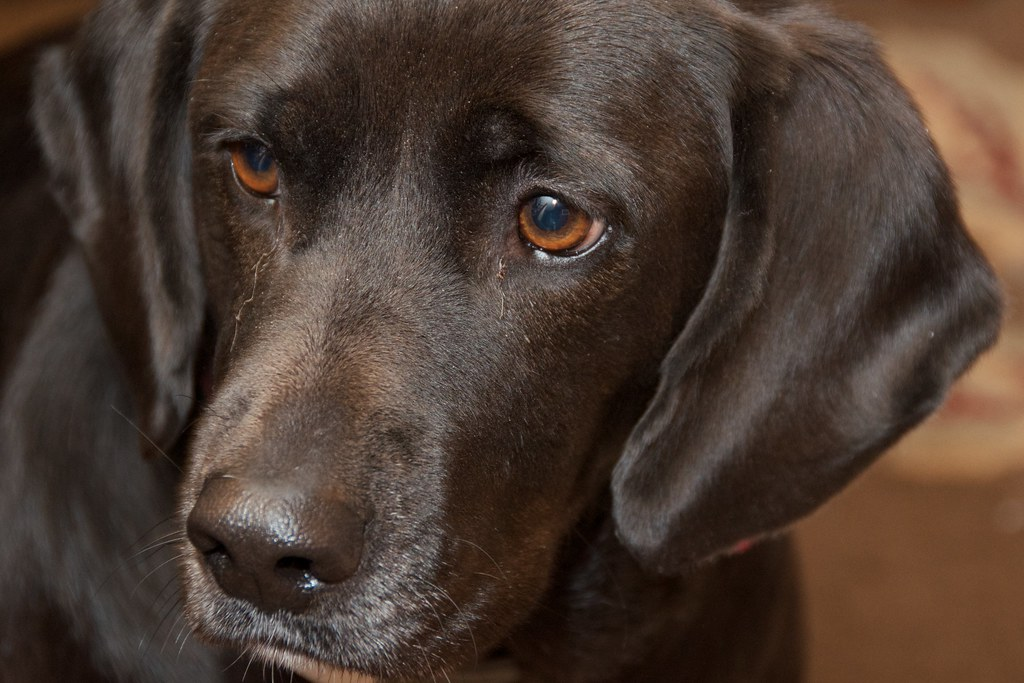 Image Result For Can Dog Scent