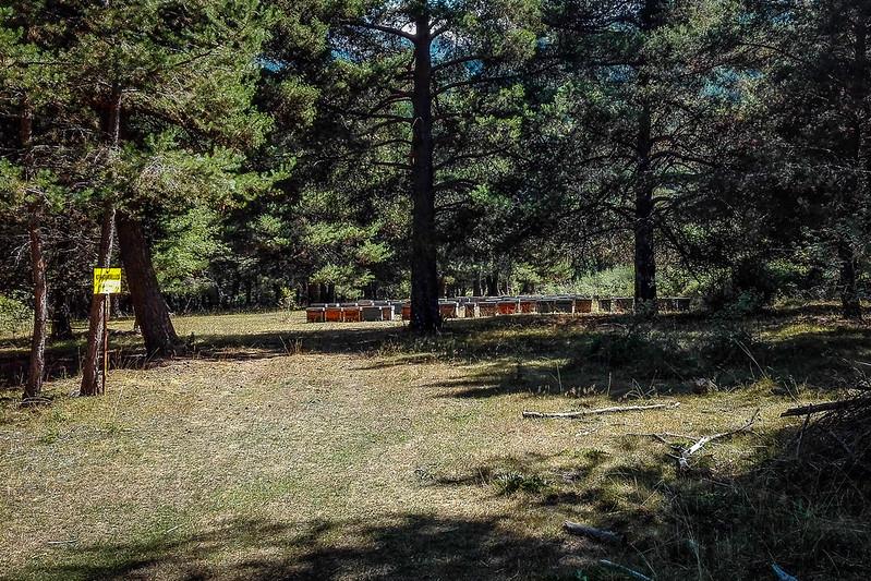 Colmenas en el bosque yendo hacia la ermita de Santes Creus