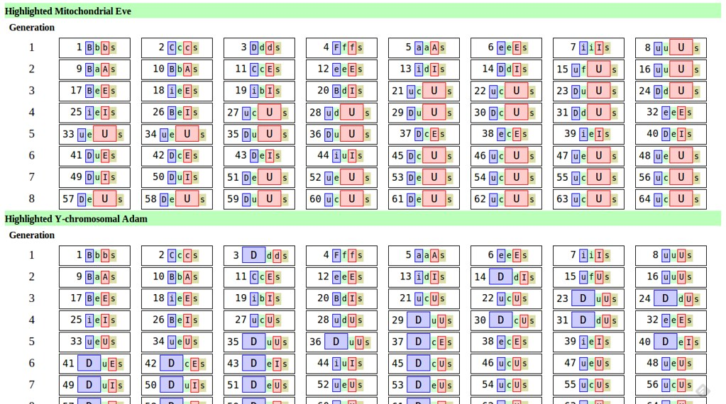 Mitochondrial Eve And y Chromosome Adam Mitochondrial Eve And y Chromosomal Adam Diagrams