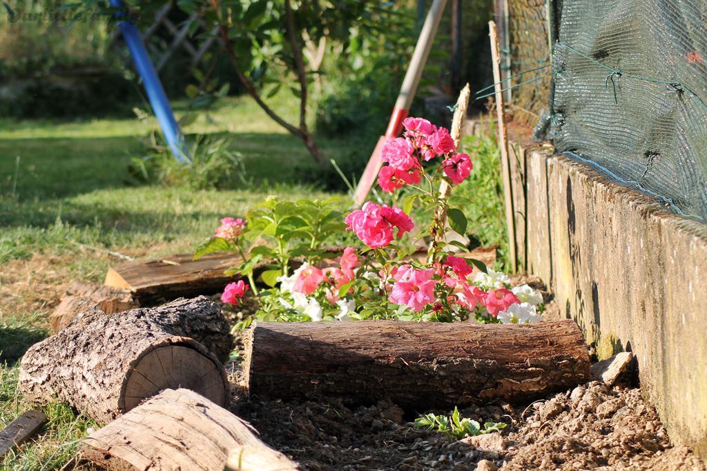 mon jardin 7