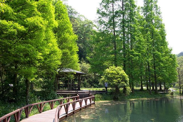 046-水生植物池-水杉-福山植物園