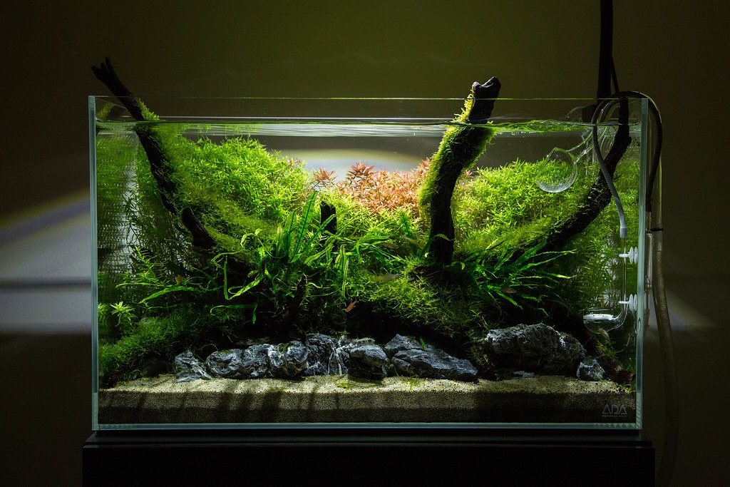 unfinished 60cm nature aquarium this particular layout