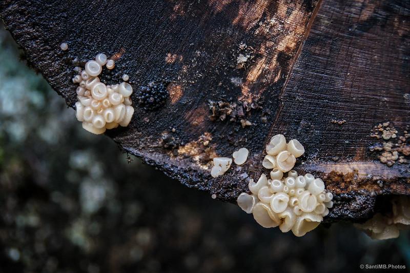 Curiosos hongos en un tronco podrido.