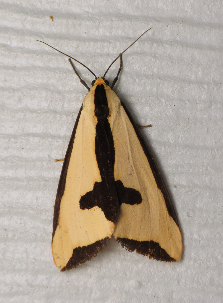 Salmon Colored Herringbone Blazer: A Lovely Salmon-colored Clymene Moth