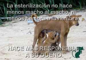 esterilizacion de perros y superpoblacion