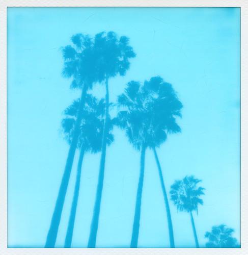 Cyanograph Palms