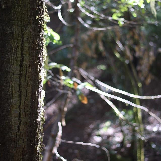 #redwoods #bigbasinstatepark #adventureswithlauren #intothewild