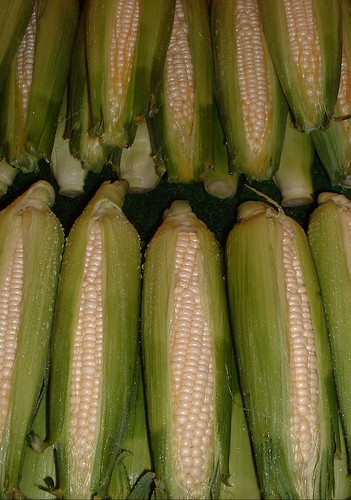 Open Innovation Challenge: Next Big Thing for Corn