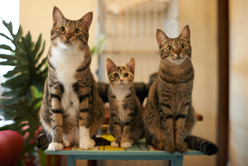 Akimasa harada flickr The three cats
