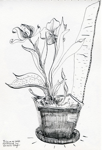 February 2014: Tulips