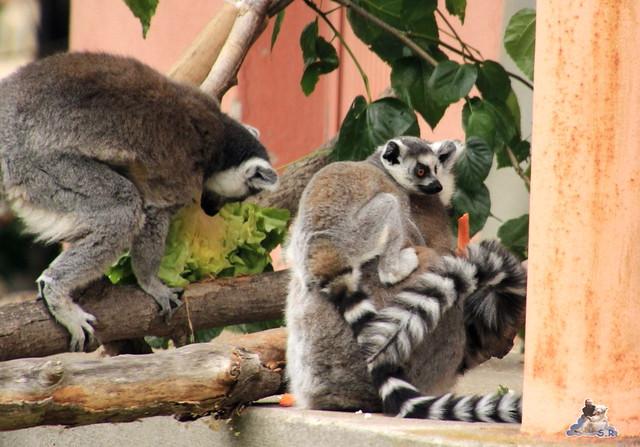 Tierpark Berlin 24.06.2014  116