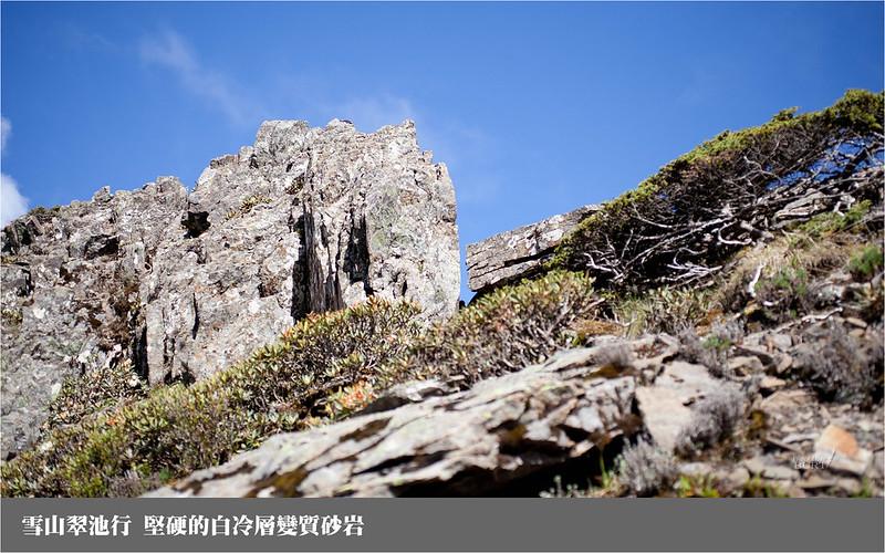 雪山翠池行_堅硬的白冷層變質砂岩
