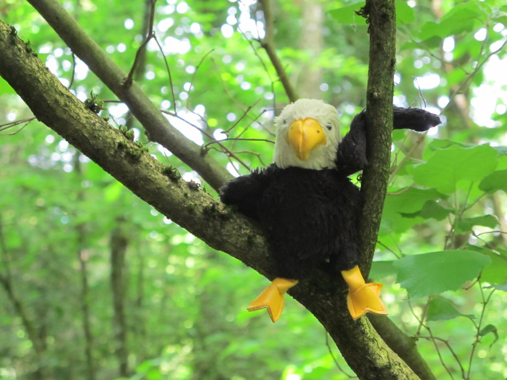 Bald Eagles Relaxing Ambient Nature Video Movie free download HD 720p