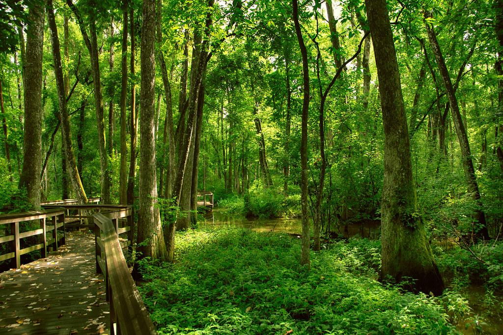 walkway through Bluebonnet Swamp Nature Center in Baton Rouge, LA ...