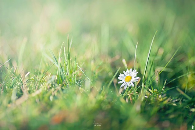 nature outdoor photography flower