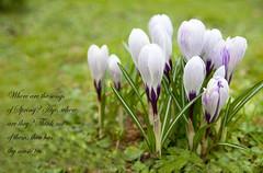 Songs of spring by Paula Fry
