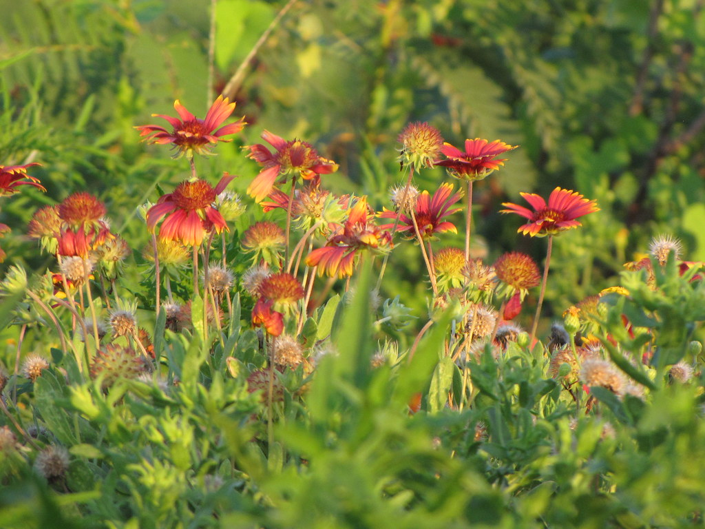 Nature S Garden Natural Health Foods Inc Orange City Fl