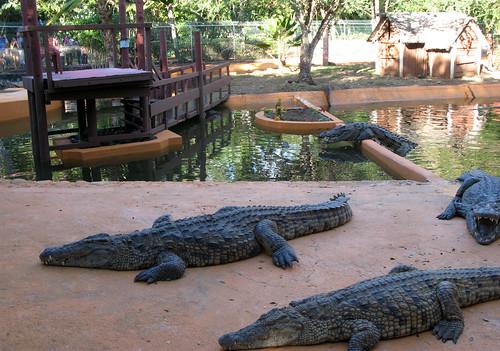 krokodilu parks