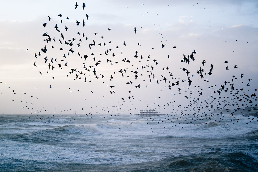 Stormy Seas And Starling Murmuration Brighton Is One Of