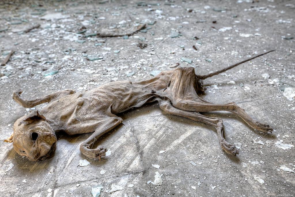 emaciated cat marc flickr