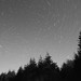 Treeline trails BW