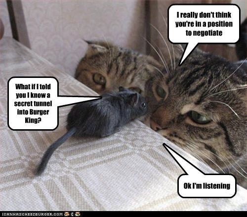 Funny Pictures Cats And Mouse Negotiate Paul Anderson